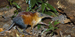 elephant-shrew_thumb