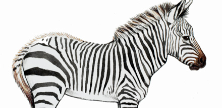mountain_zebra_440x216